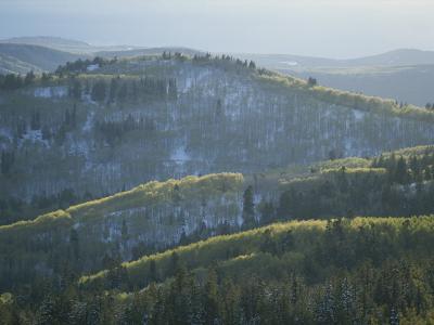 Fresh Green Aspen Trees on Snowy Slopes in the Wasatch Range, Utah