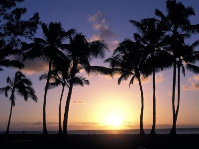 Palm Trees in Silhouette During Sunset on Oahu, Hawaii