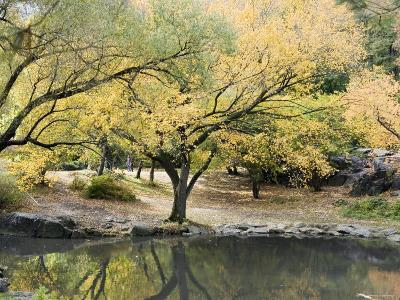 Pond and Autumn Trees in Central Park, New York