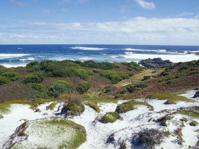 Pristine Sand Dunes and Coastal Heath above a Vast Ocean, Australia