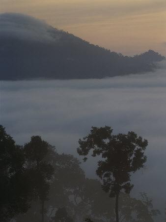 Mist-Shrouded Rainforest, Borneo