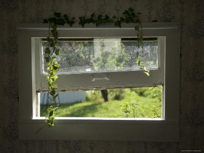 The View from an Old Window at the Fenton Farm, Greenleaf, Kansas
