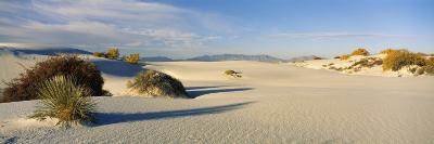 Desert Plants in White Sands National Monument, New Mexico, USA