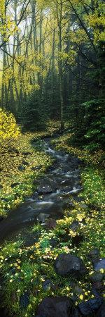 Stream Flowing Through Forest