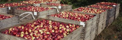 Heap of Apples in Wooden Crates, Grand Rapids, Kent County, Michigan, USA