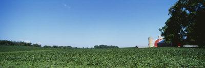 Green Soybean Crop in a Field, Grand Rapids, Michigan, USA