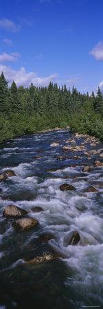 Stream Flowing Through a Forest, Little Willow Creek, Hatcher Pass Road, Alaska, USA