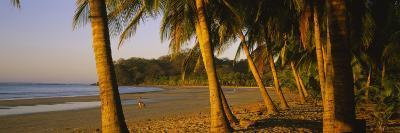 Palm Trees on the Beach, Samara Beach, Guanacaste Province, Costa Rica