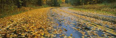 Leaves Covered Road Passing Through a Forest, Near Traverse City, Michigan, USA