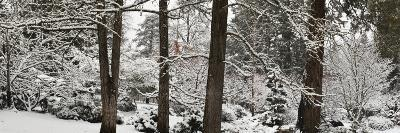 Trees Covered with Snow in a Forest, Ashland, Jackson County, Oregon, USA