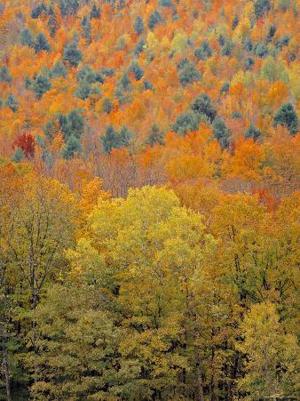 Fall Foliage, New England, USA