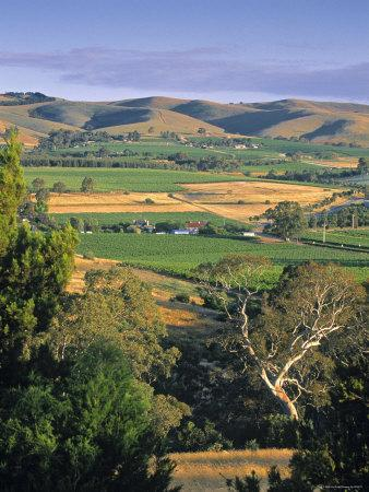 Vineyards, Barossa Valley, South Australia, Australia