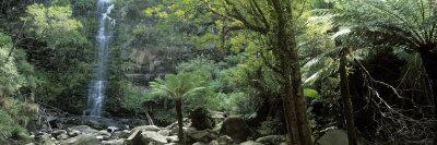 Rainforest, South Australia, Australia