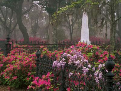 Spring Azaleas at Historic Bonaventure Cemetery, Savannah, Georgia
