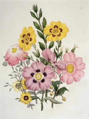 Yellow and Pink Mixed Flowers
