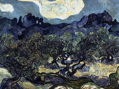 Olive Trees with the Alpilles in the Background