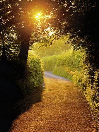 Sunlit Country Lane, Devon, England