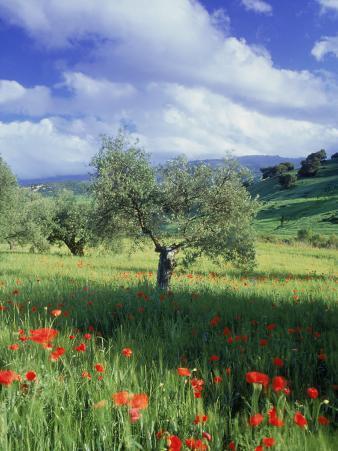 North Ronda, Andalucia, Spain