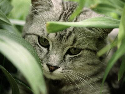 Grey Striped Cat with Leaves