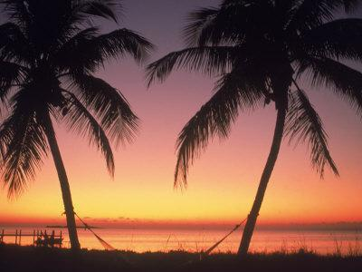 Silhouette of Trees at the Beach at Sunset, FL