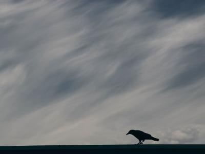 Crow Perching Against Stormy Sky