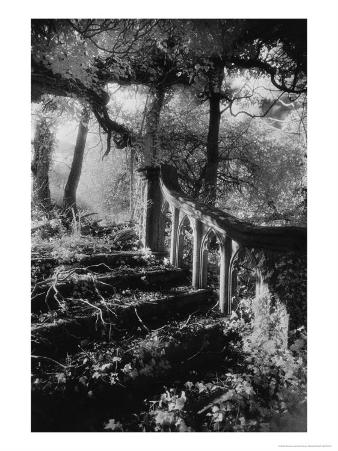 Broken Steps, Charleville Forest, County Offaly, Ireland