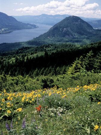 Columbia River Gorge, Gifford Pinchot Nf, WA