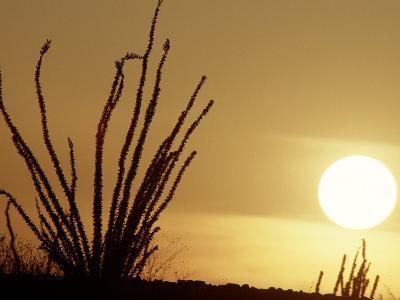 Desert Sunset with Ocotillo, CA