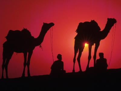 Silhouette of Men and Camels, India