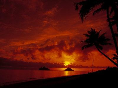 Silhouette of Palm Trees at Sunset, Oahu, HI
