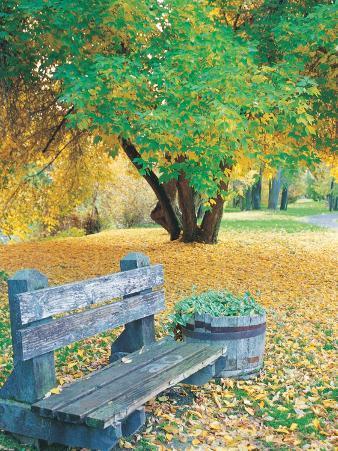 Bench, Autumn Colors