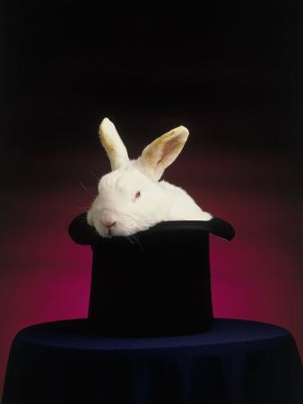 Magician's Rabbit in Hat