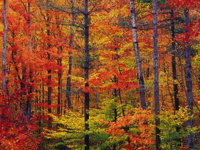 Autumn Colors, New Hampshire