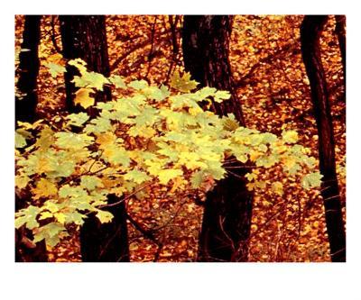 Tennessee Autumn Leaves