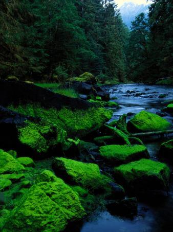 Algae Covers the Rocks Lining Salmon Creek