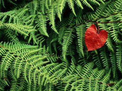 Mountain Bindweed and Fern Fronds