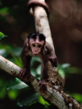 Close View of a Baby Macaque