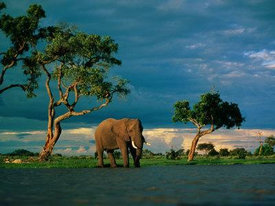 Elephant by a Water Hole on the African Plain