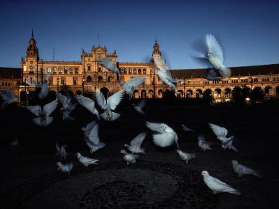 Pigeons in a Square in Seville