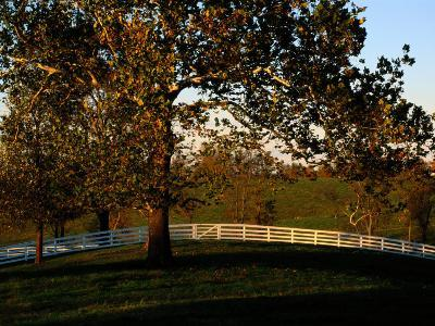 Sycamore Tree and Wood Fence at the Shaker Village at Pleasant Hill