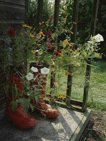 Flowers Bloom from an Unlikely Place-A Pair of Red Boots on a Porch