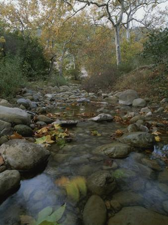 A Small, Wild Creek Flows over the Stones