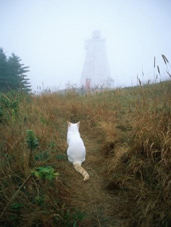 A White Cat Sits Facing the Swallowtail Lighthouse in the Fog