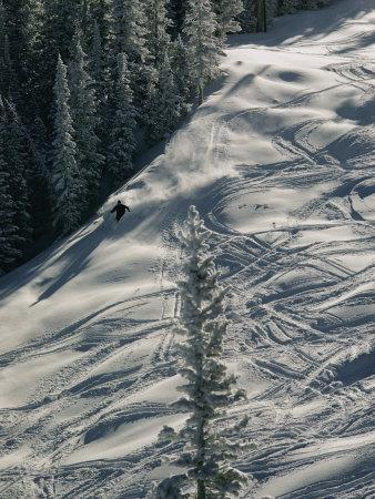 Skier on the Powder Slopes of Aspen