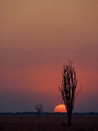 Sunset over the African Plain