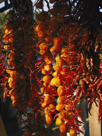 Organically-Grown Peppers are Hung at the Cary Farmers Market