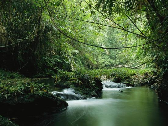 A Woodland Stream Winding Through A Burmese Jungle