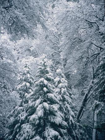 A Winter Wonderland in a Snowy Forest