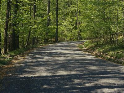 Sun-Dappled Country Road Winding Through a Wooded Landscape
