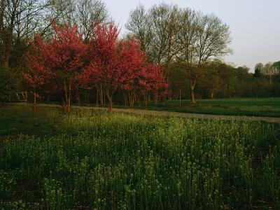 Spring View in Louisvilles System of Olmsted Parks and Parkways